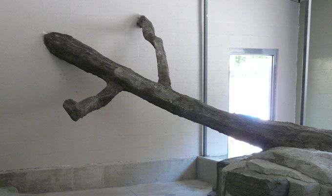 MONKEY-EXHIBIT-Concrete-LOGS-scratch