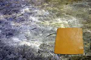 RockMolds CSS4-SSTNE Colorado Sandstone Seamless Skin Concrete Stamp Set – 4 pc
