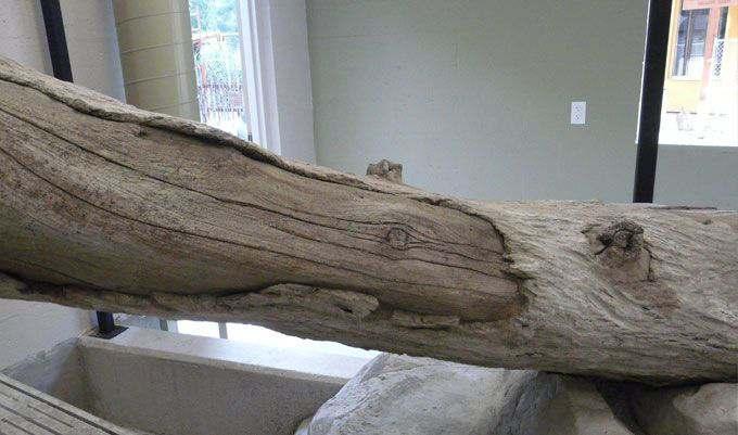 Monkey-Exhibit-Logs-stain